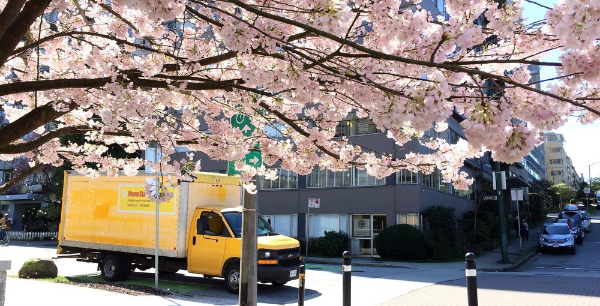 Yellow Homestart truck behind cherry blossom tree